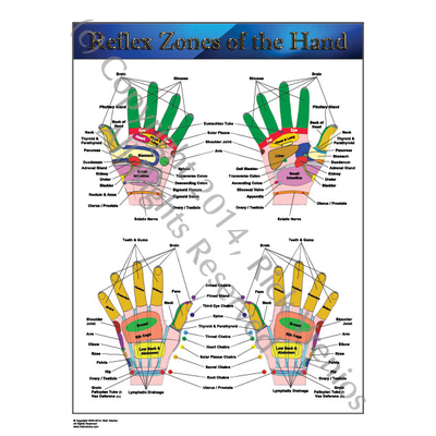 Art: Reflexology Chart - Reflex Zones of the Hand