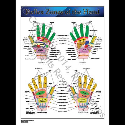 Art: Reflexology Chart - Reflex Zones of the Hand