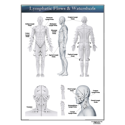 Art: Lymphatic Flows & Watersheds